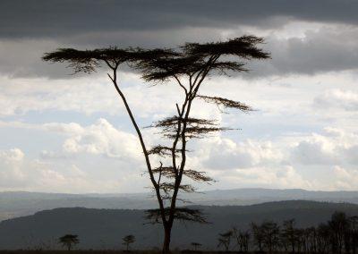 Kenia Baum_Gewitter