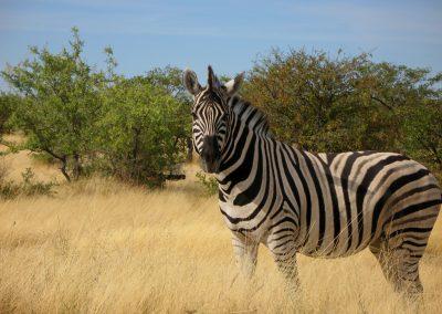 Namibia Mai 2009 016