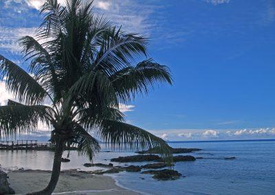Seychellen_Palme_Strand